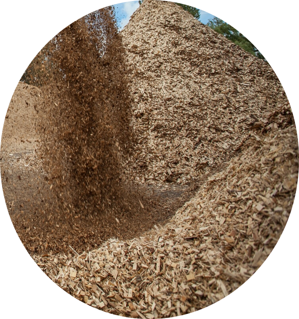 Wood chips for cellulose